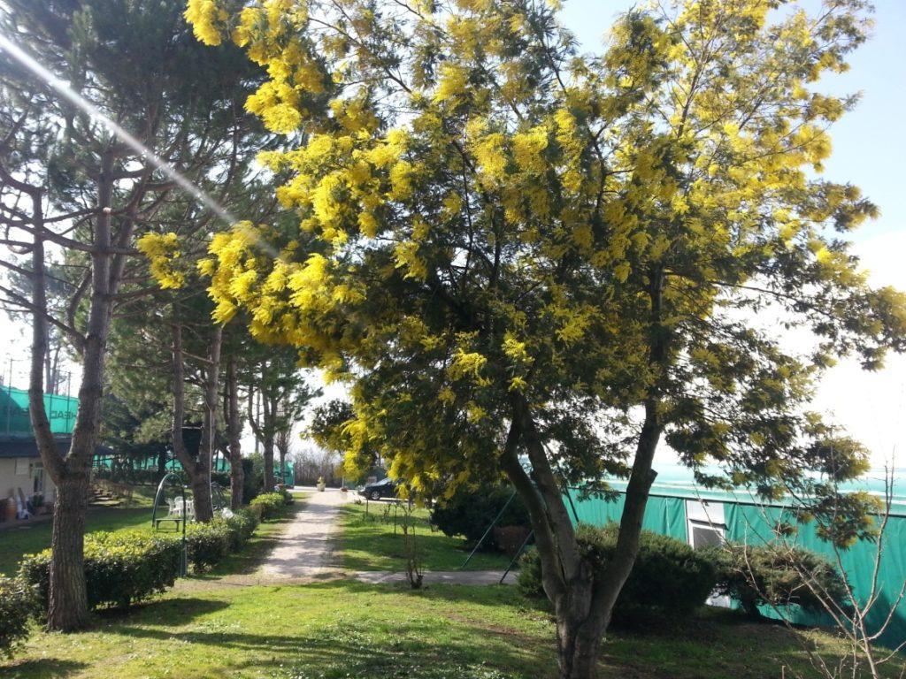 Academy (esterno albero)
